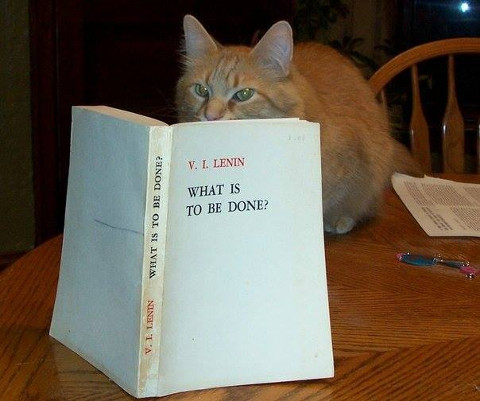 cat reading Lenin