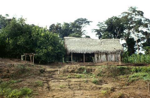 hütte im Dschungel