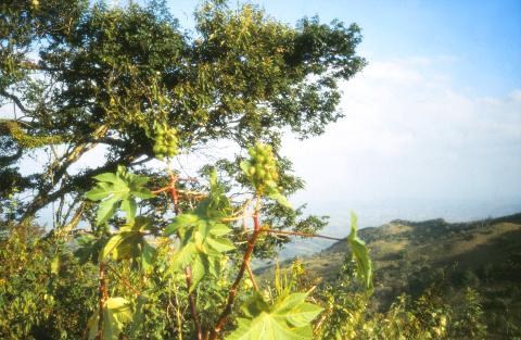 Sierra de Falcòn