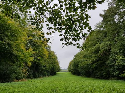 hixterwald