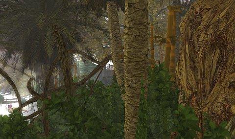 fog in the jungle
