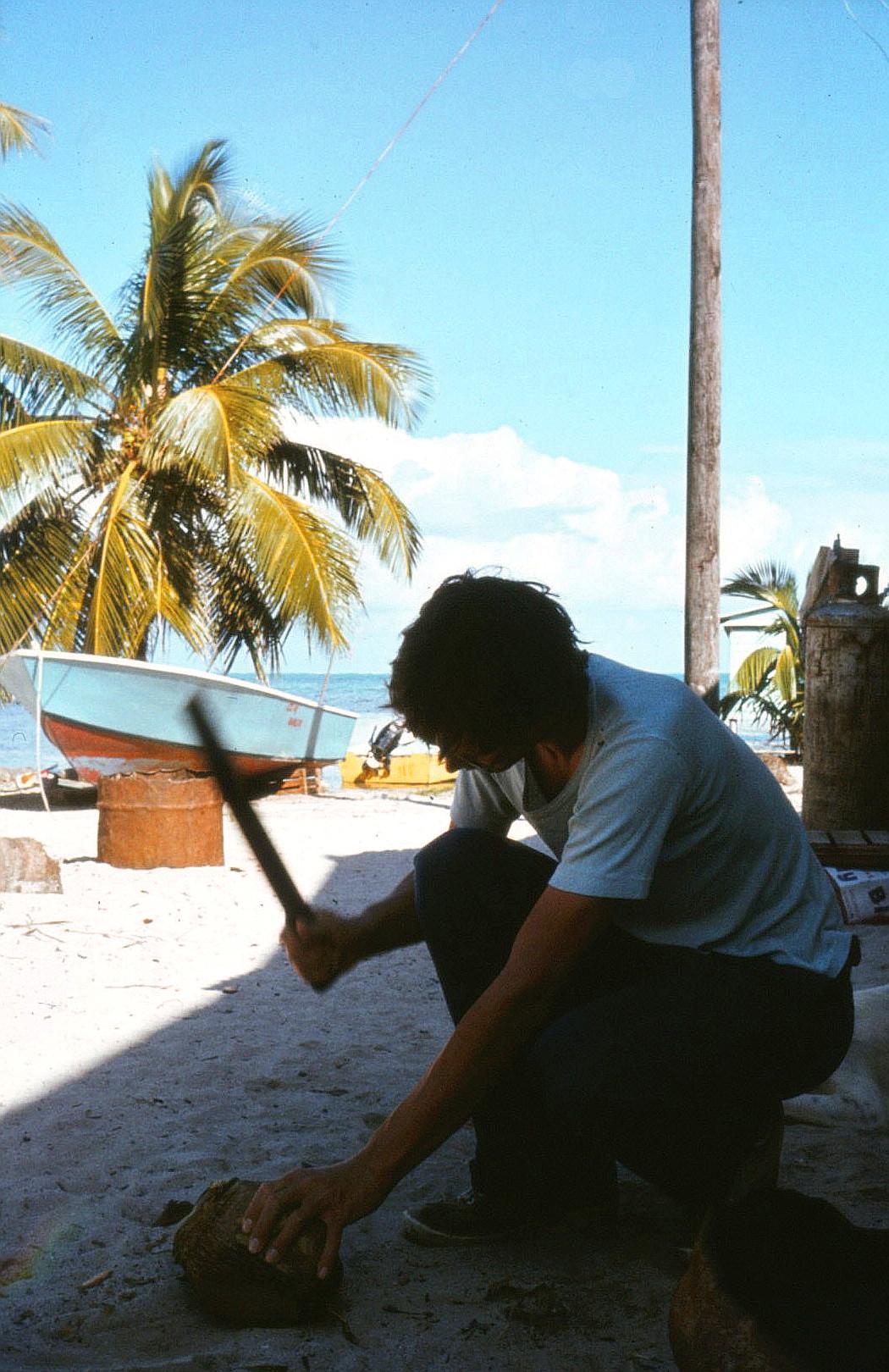 ritter der kokosnuss brücke