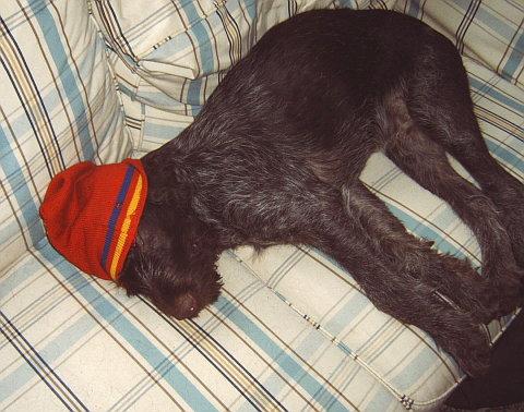 Ajax the dog
